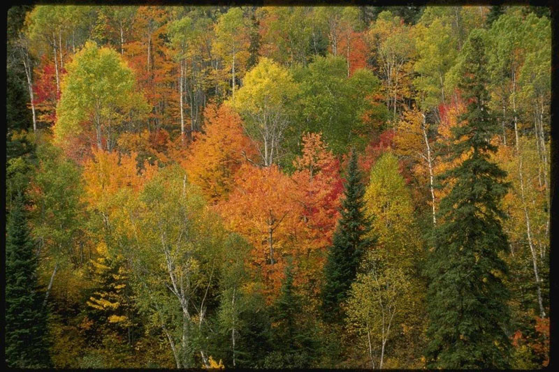 http://photoclip.narod.ru/photo/autumn12.jpg