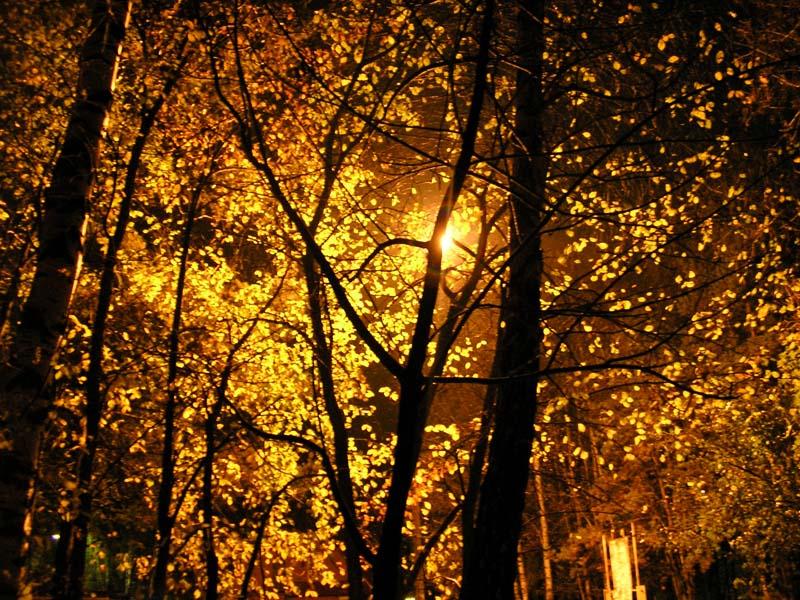 http://photoclip.narod.ru/photo/autumn16.jpg