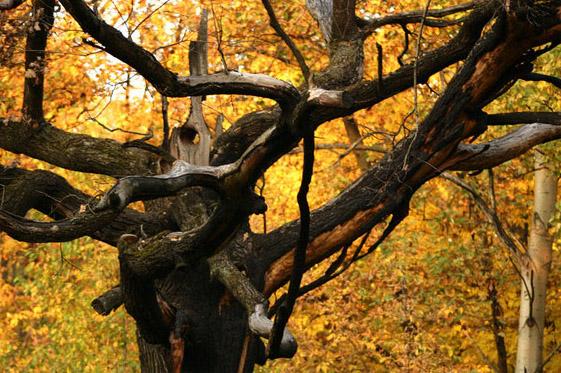 http://photoclip.narod.ru/photo/autumn17.jpg