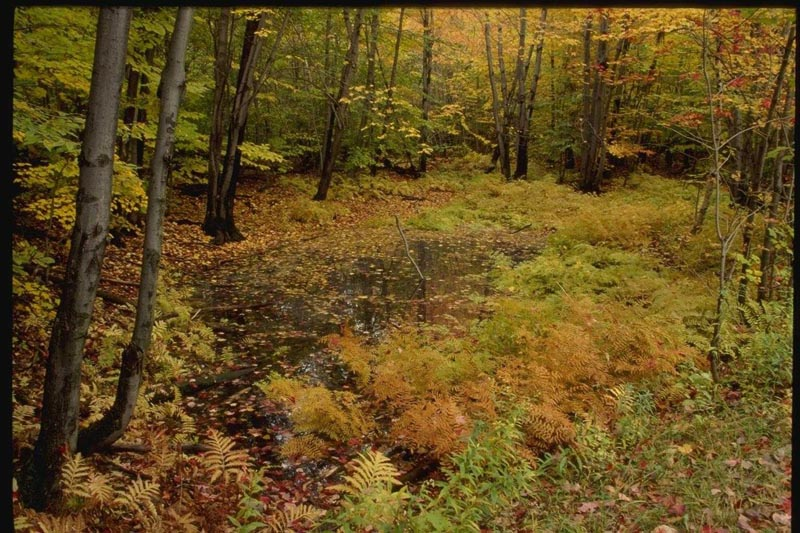 http://photoclip.narod.ru/photo/autumn18.jpg
