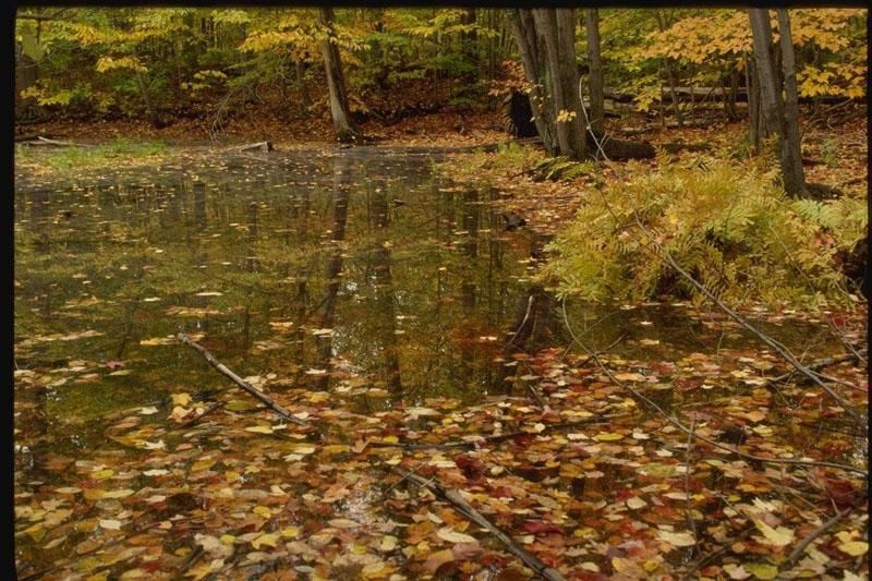http://photoclip.narod.ru/photo/autumn19.jpg