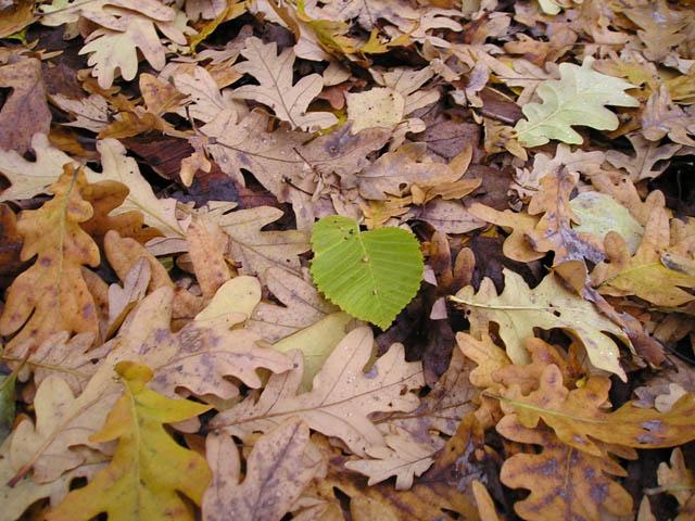 http://photoclip.narod.ru/photo/autumn20.jpg